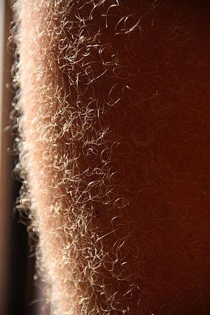 Korte frisyrer til mænd med underbenk